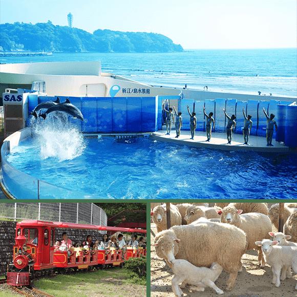 神奈川のおでかけスポットまとめ_新江ノ島水族館・こどもの国