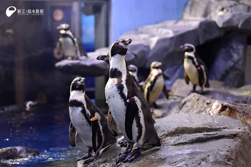 ペンギン・アザラシ