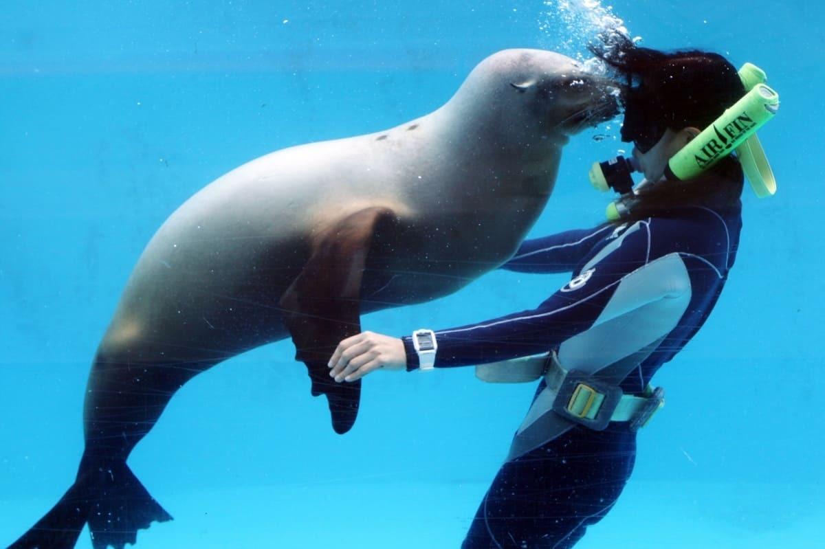 下田海中水族館のトレーナーとアシカ