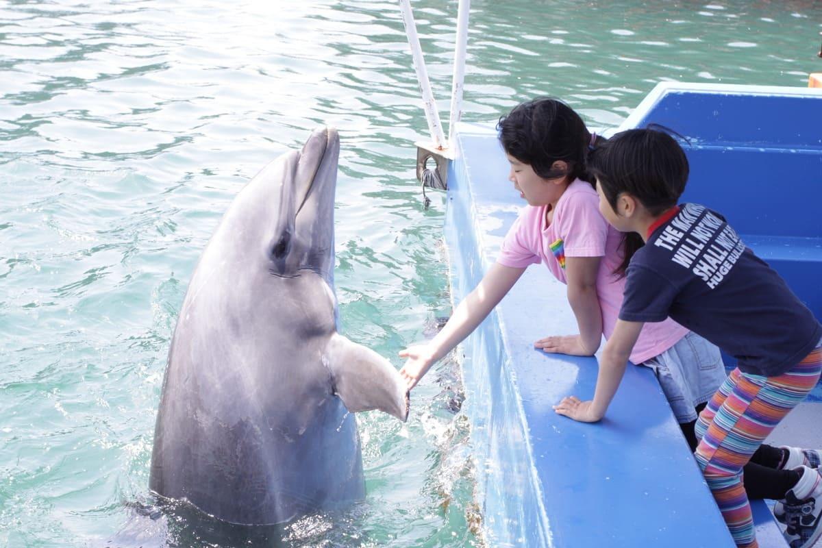 下田海中水族館のイルカふれあい体験
