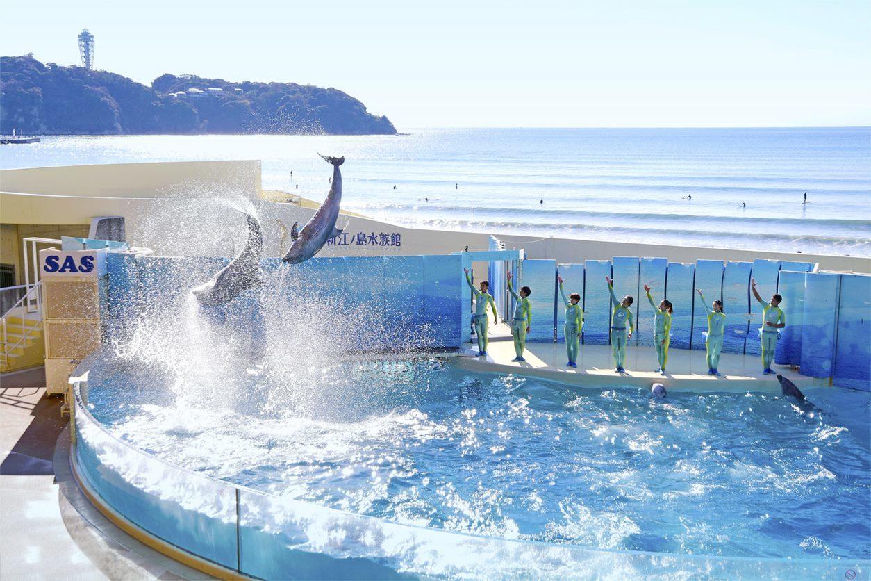 相模湾と海岸を望む新江ノ島水族館(えのすい)迫力のイルカショー
